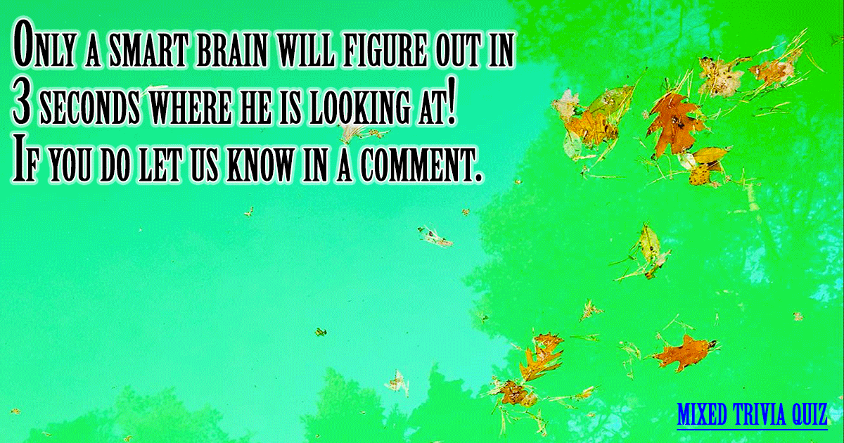 Do you have a smart brain?